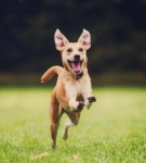 happy-dog-running-by-500px-600x350