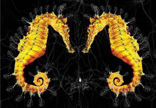 hippocampal-neurons_0-1